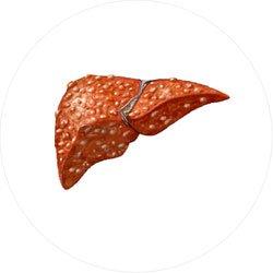 Внутренние органы,  частичная или полная потеря которрых не является смертельной
