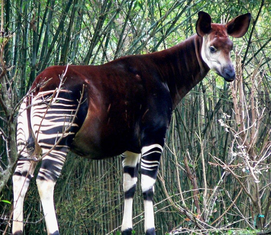 8 животных, выглядящих как другие животные, скрещенные с ещё какими-то животными