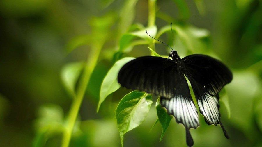 Собрание частных коллекций различных тропических насекомых со всех континентов мира.