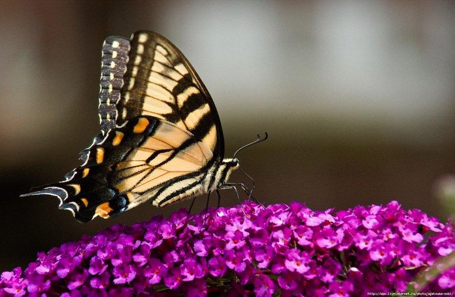 6 насекомых, которых вы можете завести у себя дома