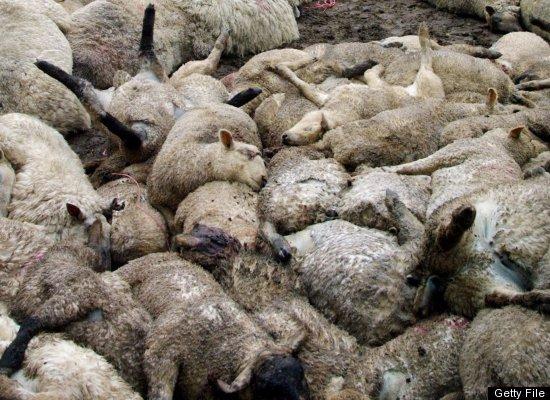 7 трагических случаев суицида в животном мире