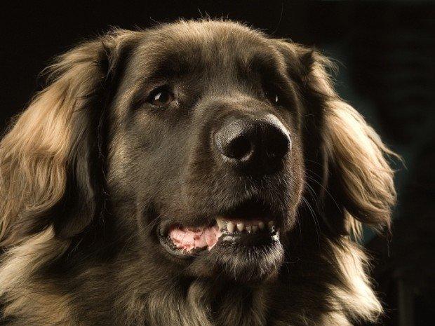 5 невероятных способов, которыми собаки могут читать ваши мысли