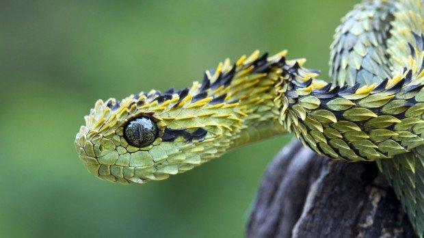 11 самых странных и необычных змей