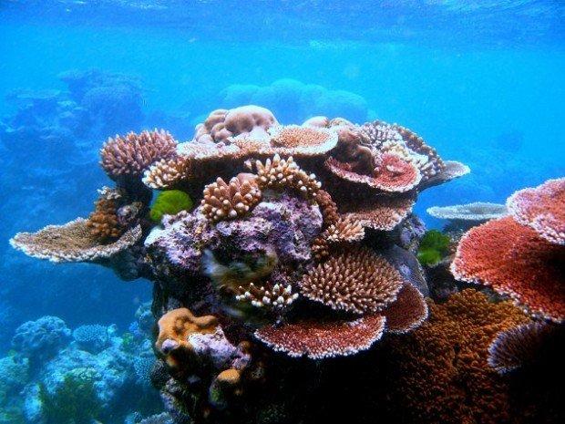 10 тайн природы, которые удалось разгадать только в прошлом году