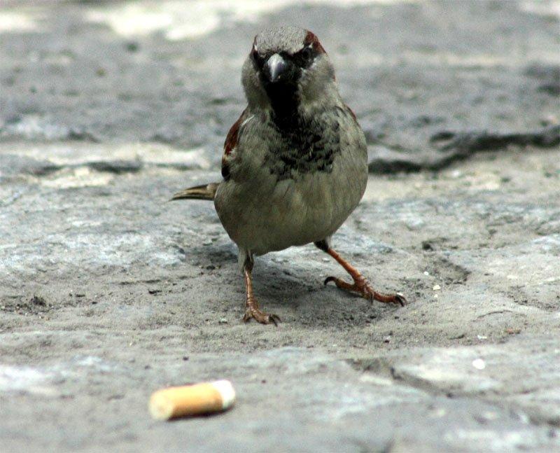 5 шокирующих способов, которыми животные научились использовать наш мусор