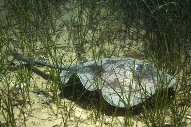 213-620x412 Животные, обнаруженные учёными в единственном экземпляре (фото)