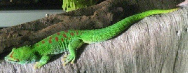 411-620x243 Животные, обнаруженные учёными в единственном экземпляре (фото)