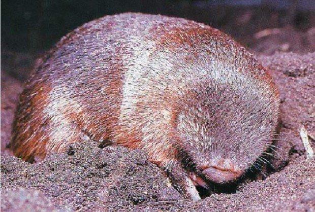 10 видов животных, обнаруженных учёными в единственном экземпляре