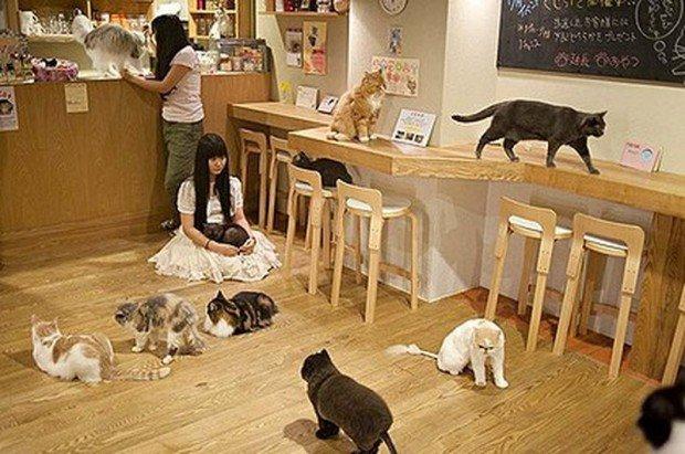 10 странных мест, появившихся благодаря людскому обожанию кошек