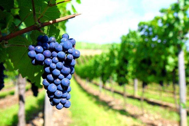 Итальянские зоны виноделия пополнили список ЮНЕСКО
