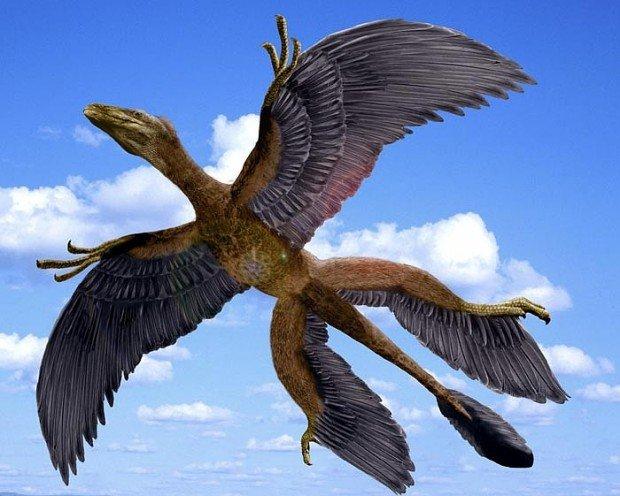 Changyuraptor yangi / © www.nashaplaneta.su