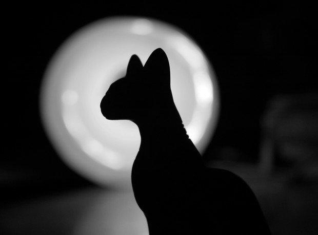 Семь интересных фактов о суевериях