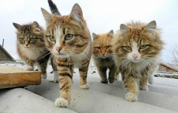 Кошки, заботившиеся об аргентинском мальчике