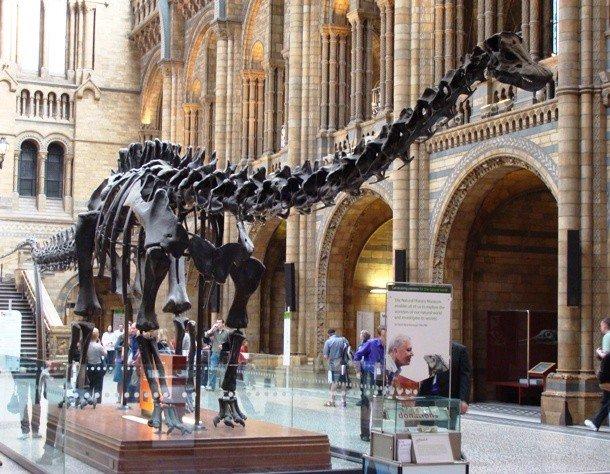 Зал музея естественной истории, Лондон