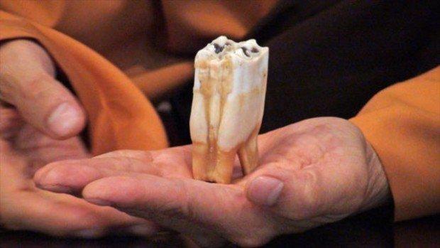 Зубы Будды