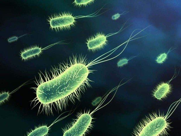 Бактерии, пожирающие тело изнутри