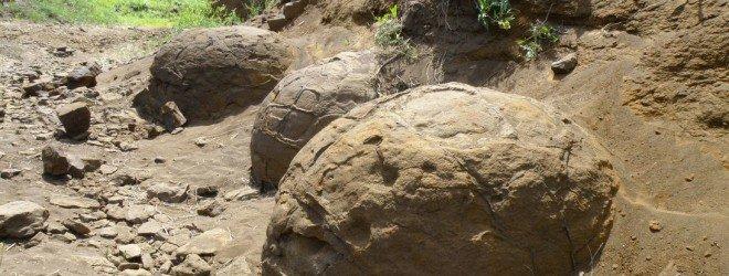 Окаменелые яйца динозавра