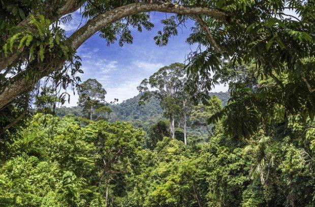 Тропические леса Суматры
