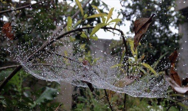 Роса на паутине