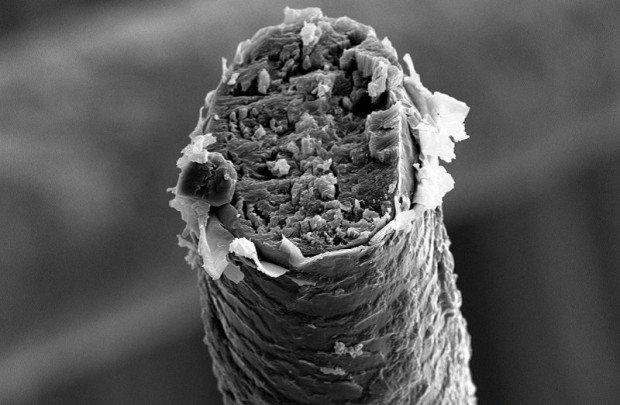 Волос человека под микроскопом