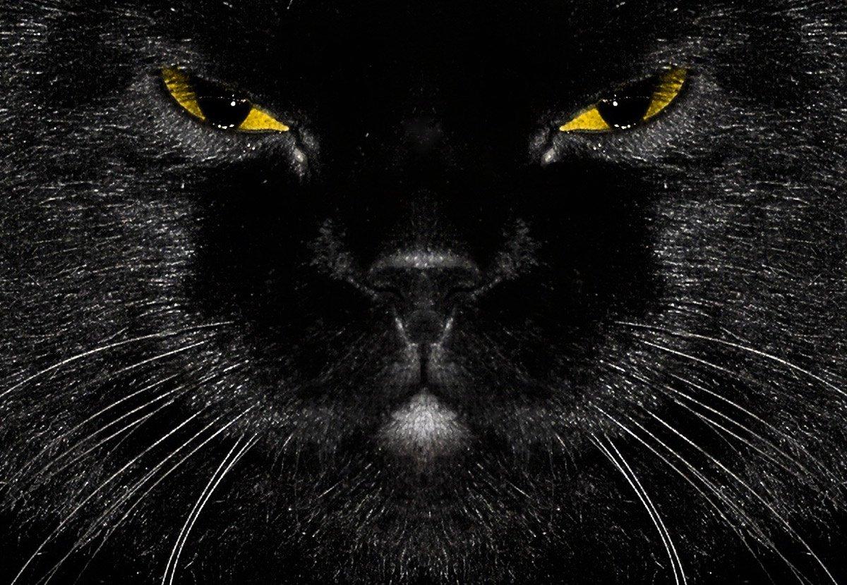 Чёрный кот прищурился