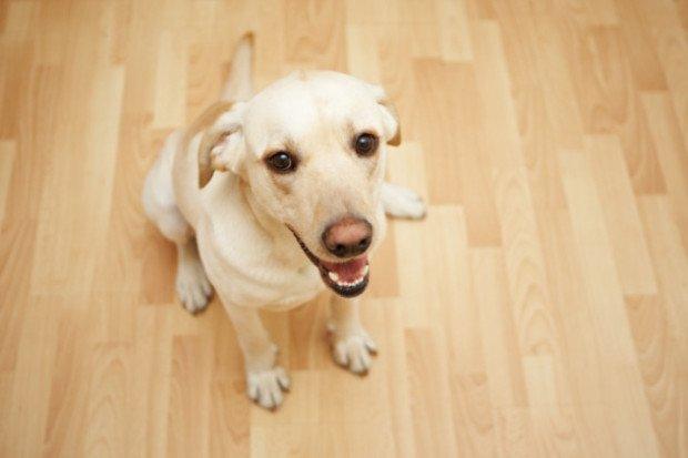 Домашний пёс