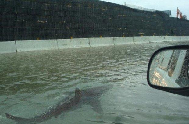 Фейковое фото акулы, плывущей по улицам города