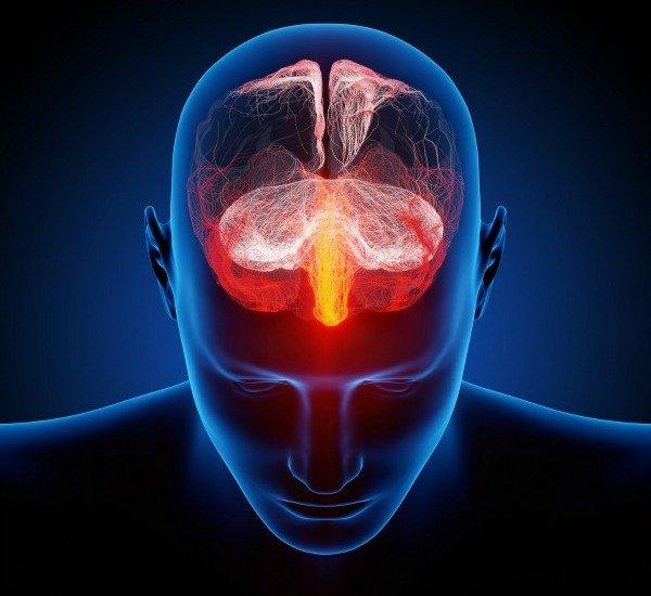 Головной мозг человека (компьютерная графика)