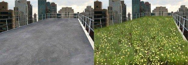 Слева - голая крыша многоэтажного дома, справа - она же, но усеянная цветами
