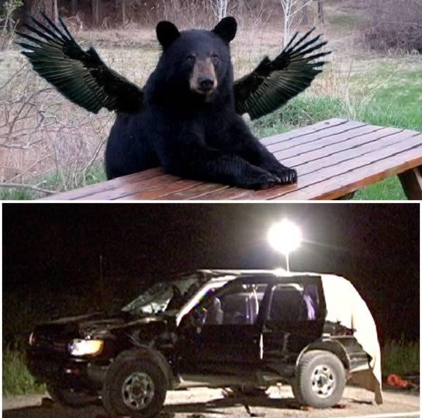 Медведь с крыльями и разбитое авто