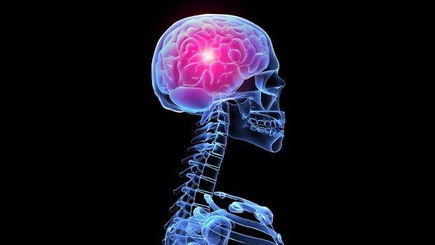 Скелет и мозг человека