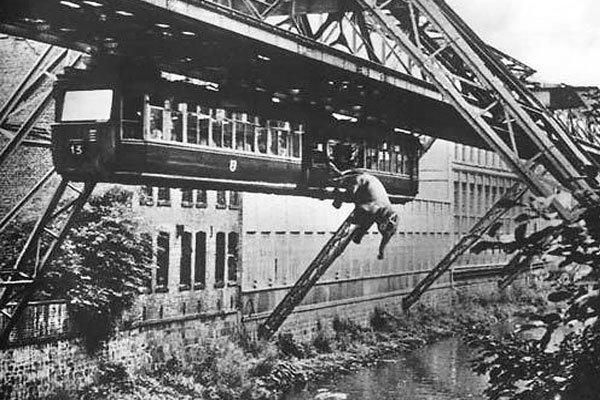 Слон падает из висячего поезда