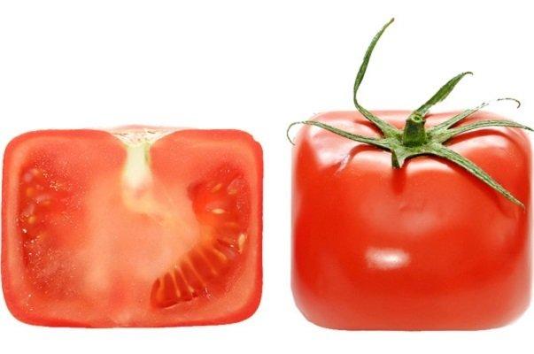 Квадратные помидоры