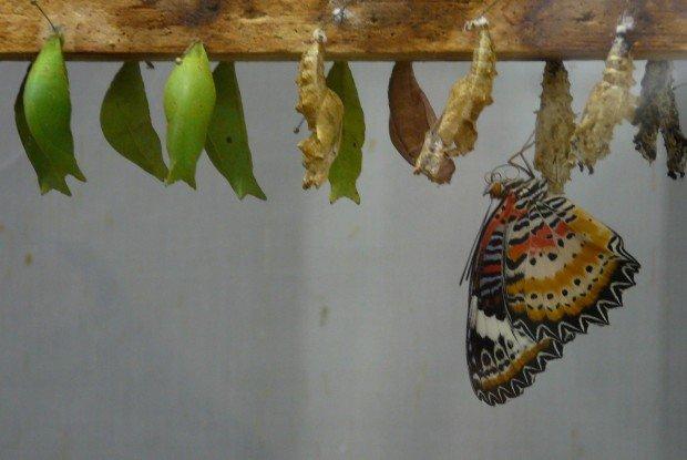 Метаморфоз бабочек