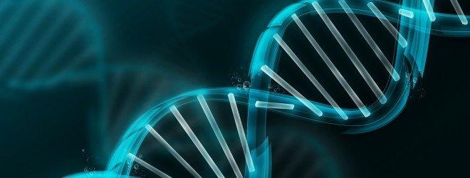 25 фактов о гормонах и ДНК