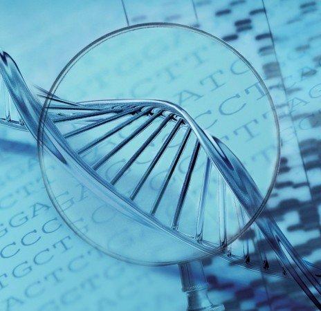 ДНК под увеличением