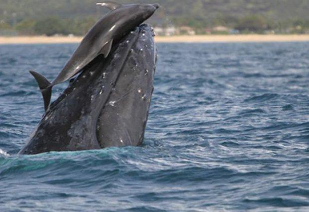 Дельфин и кит