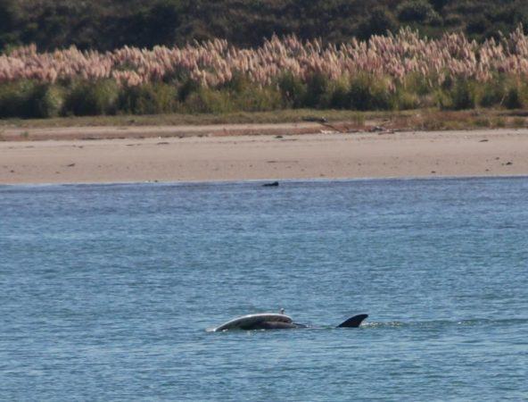 Дельфин Моко
