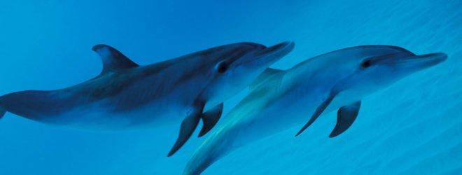 дельфины улыбаются