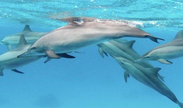 Дельфинья стая