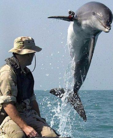Тренировка дельфина
