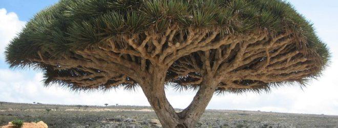 Топ-10 необыкновенных деревьев