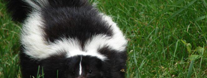 10 экзотических животных, которых вы вряд ли представляли себе в качестве домашних питомцев, а зря