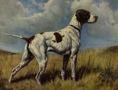 10 пород собак, которых больше не существует
