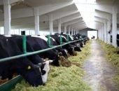 Строительство фермы для коров
