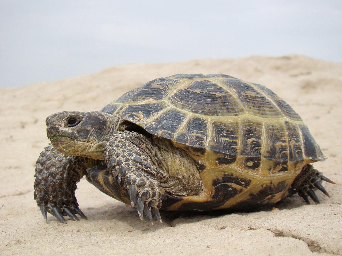 6 довольно отвратительных проблем, о которых никто не предупреждает хозяев экзотических домашних животных