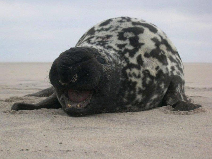 8 животных, похожих на других животных, скрещенных с ещё какими-то животными