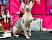 5 любопытных фактов о кошках, которые вы, возможно, не знали