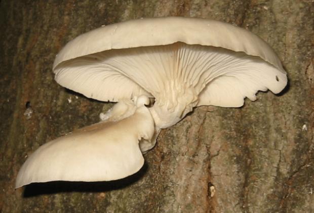 Десять хищных грибов и растений, о существовании которых вы не догадывались