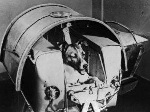 лайка космонавт